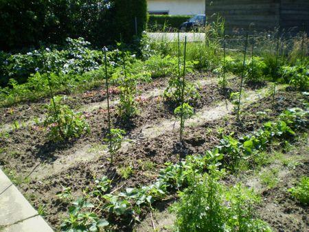 Jardin potager une citadine la campagne for Blog jardin potager